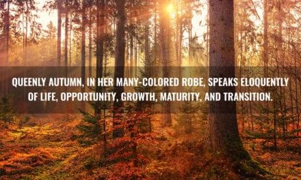 The Beauty of Autumn Days