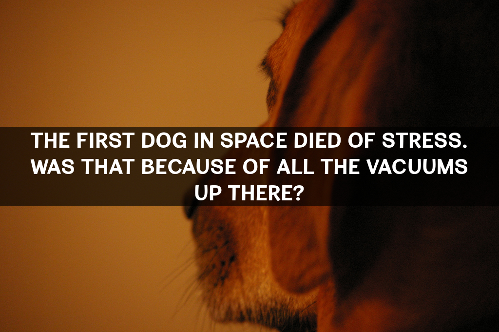 dog-space-vacuum