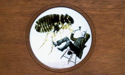 Mark Twain and the Courageous Flea, a short story