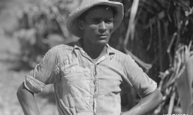 Farm laborer working in a sugar field near Guanica, Puerto Rico