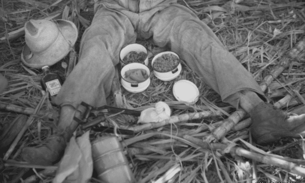 A sugar workers lunch consisted of rice, beans and papaya