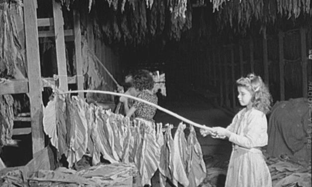 Girl stringing tobacco in a tobacco barn. Barranquitas, P.R.