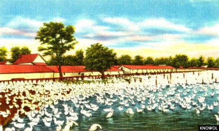 A typical Long Island duck farm, Long Island, N. Y.