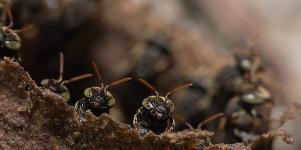 How a 14th Century Warlord Gained Courage from an Ant